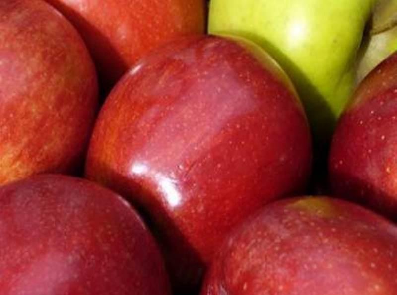 Јаболката и нивниот пласман – секојдневна тема на разговор меѓу преспанските овоштари