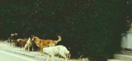 И Ресен го има проблемот со кучиња-скитници
